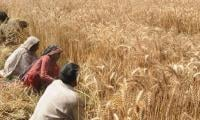 Government's policy measures to boost agri sector under CPEC