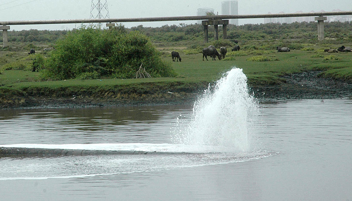Image result for largest urban forest in the world will be planted along the Lyari River
