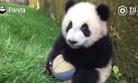 World's cutest goal keeper ever
