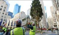 Rockefeller Centre set to hoist its yearly Christmas Tree