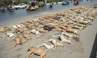 Sindh Assembly speaker for exporting Karachi stray dogs