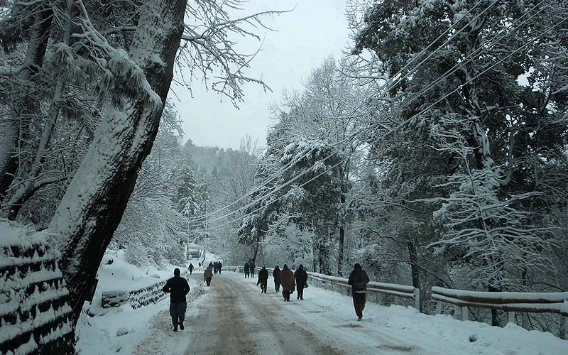 A beautiful view of snow covered trees during snowfall in Murree.