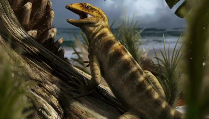 Oldest known lizard discovered: Why is the tiny reptile so unique?
