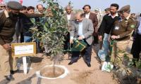 100 million tree planting campaign to start from June 15
