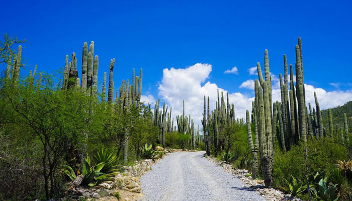 Valley of Tehuacan-Cuicatlan listed as UNESCO heritage site  e6858a130c0f2