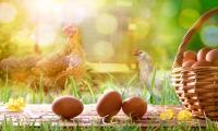 BZ University Multan to mark World Egg Day