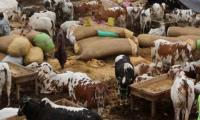 COVID-19 pandemic: Sindh against setting up cattle markets, province tells federation