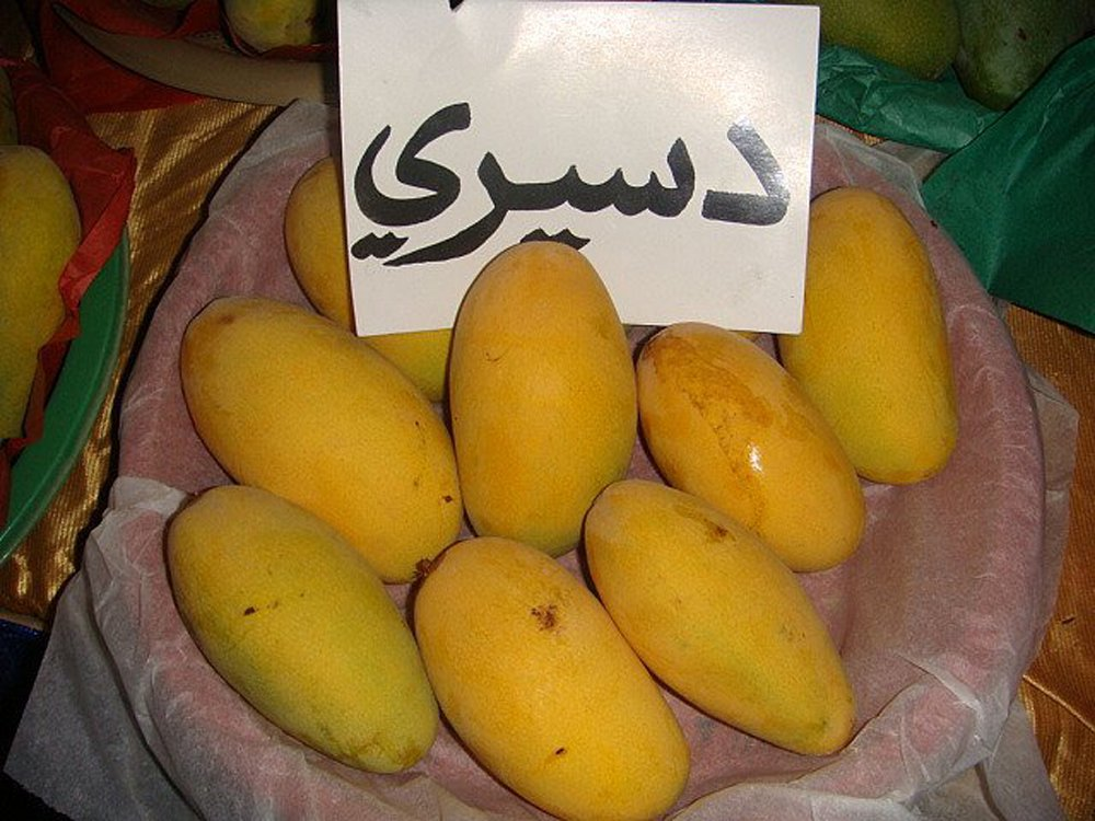 Mango export likely to increase this year | Business | thenews com pk |