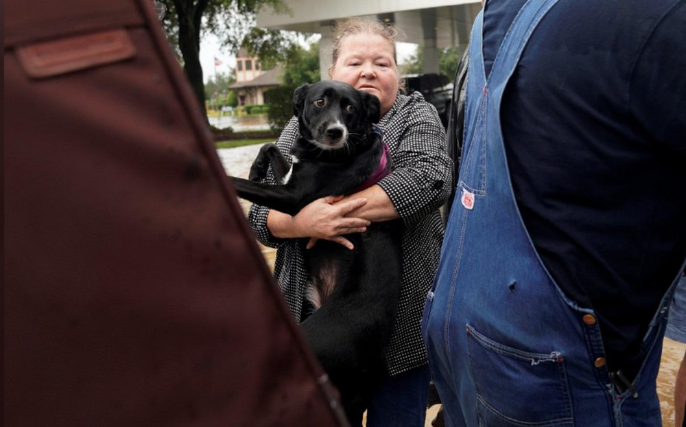 Harlingen Humane Society Takes in Displaced Pets