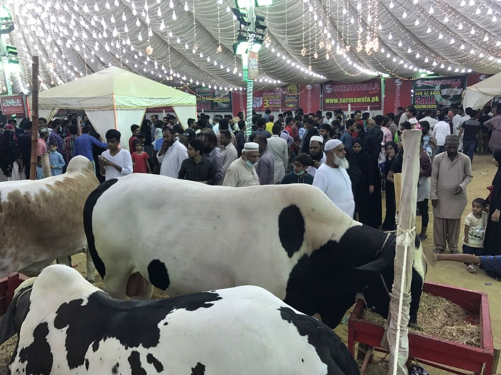 A trip to Asia's biggest and famous cow 'Mandi'   Pakistan