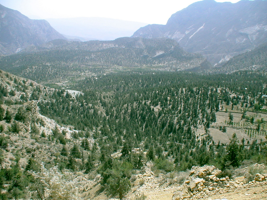 Ziarat Juniper Forest