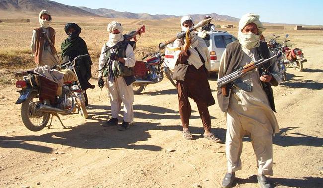 Pakistani Taliban killed in Paktika air strike