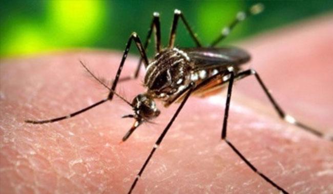 No measures so far taken to avoid Zika virus outbreak