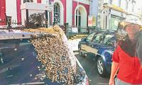Bees follow car for 24 hours to rescue queen!