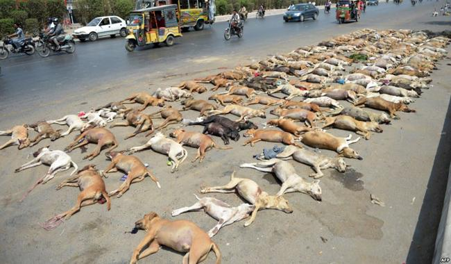 Controversial dog culling strategy challenged in court