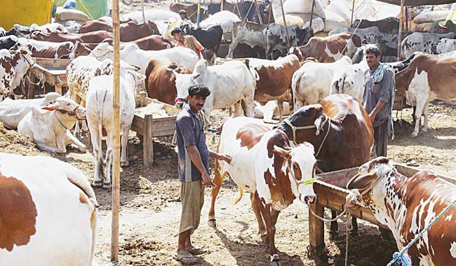 Strong vigilance needed ahead of Eidul Azha to avoid losses
