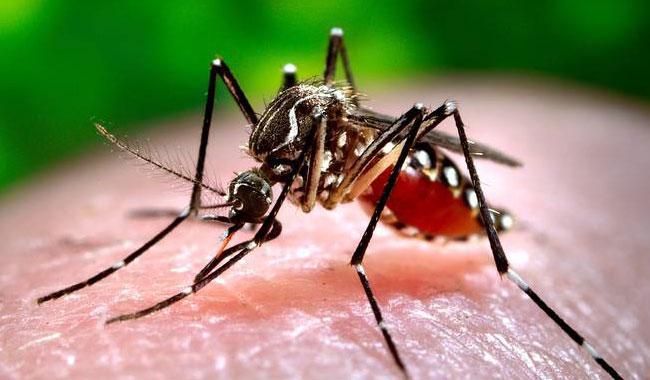 No let-up in dengue fever outbreak