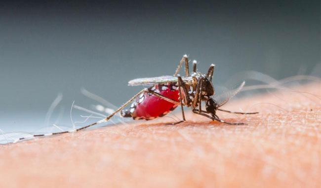 No case of dengue fever reported so far