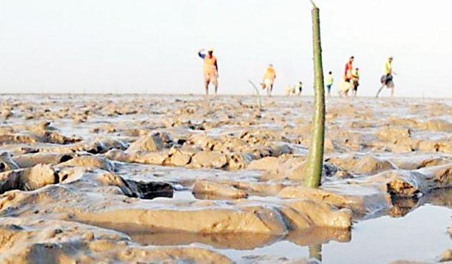 Rising salinity and water scarcity put Indus delta farmers on edge
