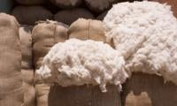Traders plan 20,000 tons of cotton import from Afghanistan
