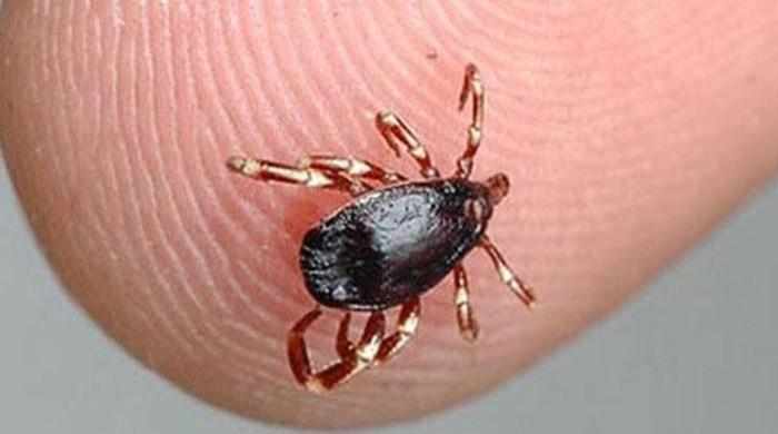 Congo fever claims life of 23-year-old man