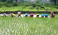 Lower prices of agro products costing heavily on farmers