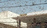Locust swarms seem to have left Karachi, says official