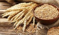 ECC raises wheat support price to Rs1,350/40kg