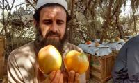 Karachi's small-scale vegetable growers on the brink of bankruptcy, thanks to falling demand