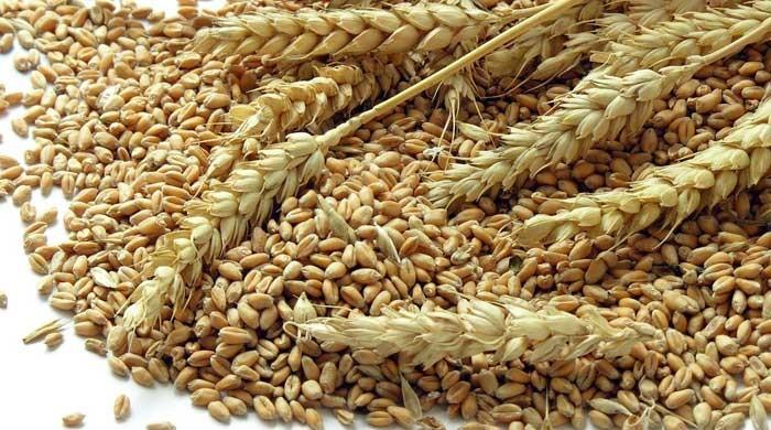 Punjab farmers reject wheat subsidy