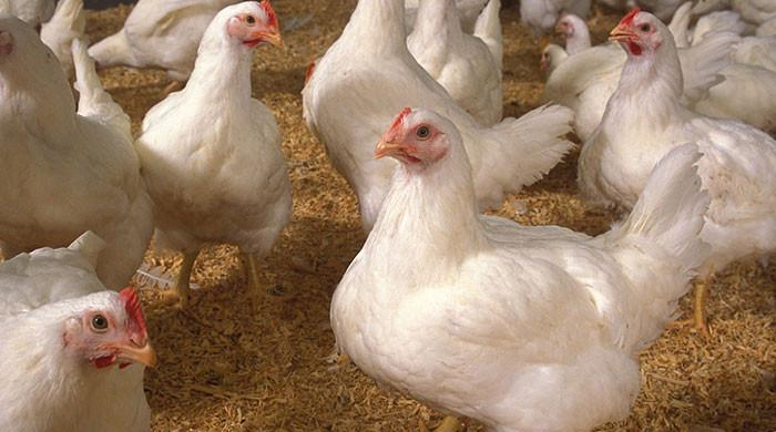 Poultry prices have risen sharply