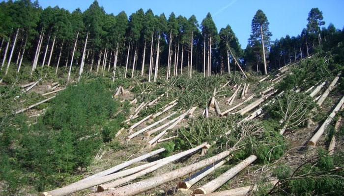 How deforestation threatens Thar Desert dwellings