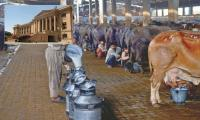Commissioner told to ensure sale of milk at official rate
