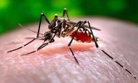 21 dengue patients reported in Punjab