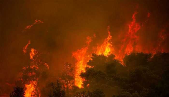 Wildfires emit record CO2