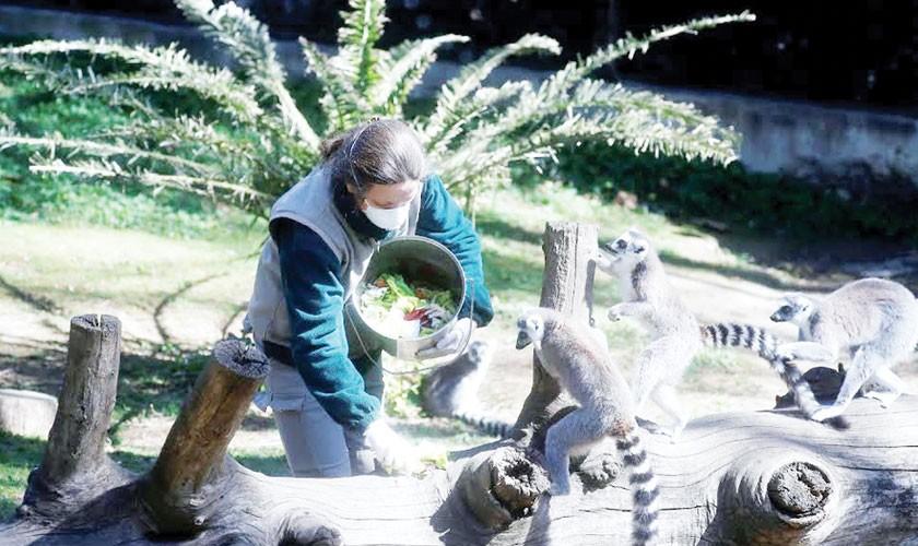 Monkeys killed at NASA research center
