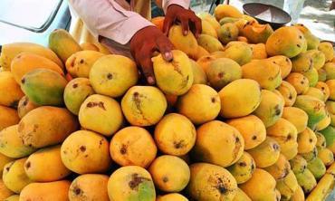 Pakistani mango sweetens world markets