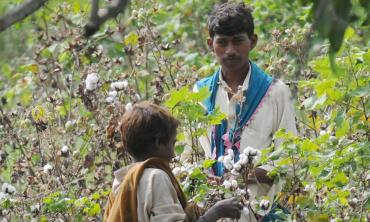 Counting the cotton cost