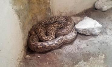 The misunderstood serpent