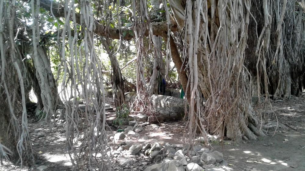 Of Vedas and Sashoma