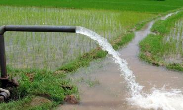 Watering down the cost of rice