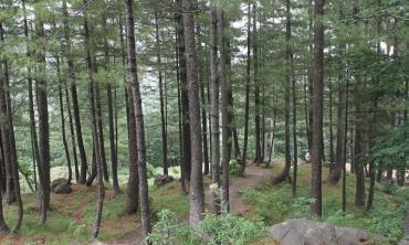 Understanding timber mafia