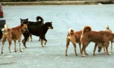 Just dogs, stray dogs