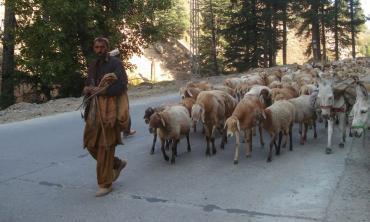 Towards greener pastures