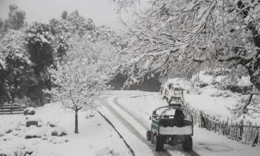 White winter's tale