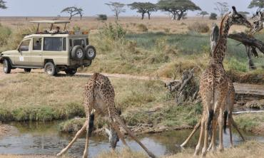 In a land of the big five