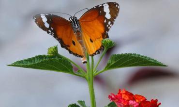 Butterflies are fluttering away