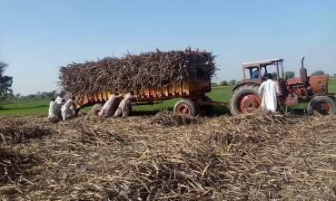 Tackling unemployment in rural Sindh