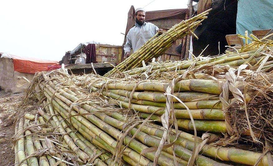 Sugar turns bitter in Sindh