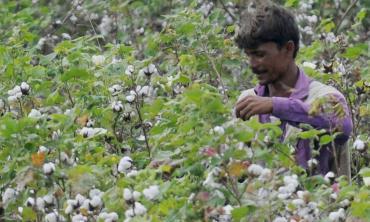Cotton cost